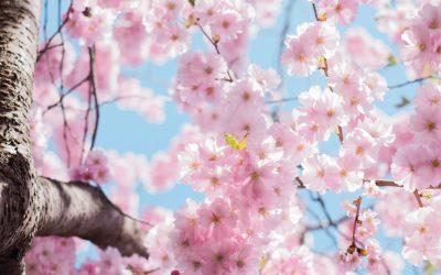 Altes Wissen neu entdeckt – Der Frühling in uns